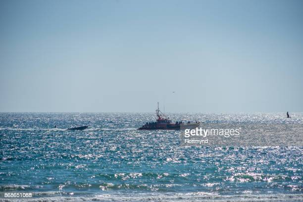 Bringing in refugees in Barbate, Spain, 30 October 2017