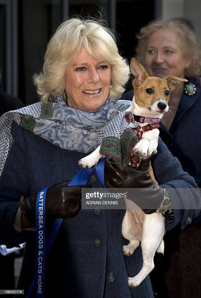 Britain's Camilla, Duchess of Cornwall, carries her dog Bluebell as she arrives at the Battersea Dogs & Cats Home in London on December 12, 2012. Earlier in the year The Duchess rehomed Bluebell, a nine-week-old Jack Russell Terrier that was found astary in a London park.