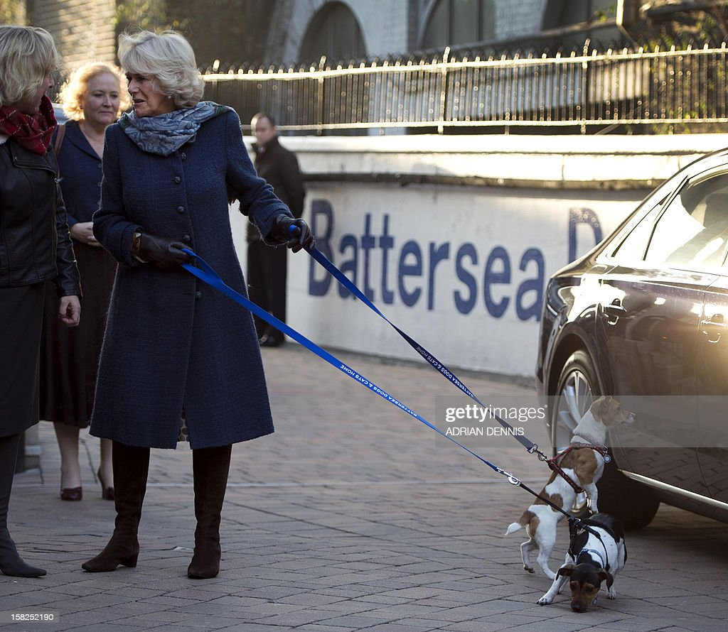 Britain's Camilla, Duchess of Cornwall, holds her two adopted dogs Bluebell and Beth as she arrives for a visit to the the Battersea Dogs & Cats Home in London on December 12, 2012. Earlier in the year The Duchess rehomed Bluebell, a nine-week-old Jack Russell Terrier that was found astary in a London park. In August 2011, Her Royal Highness adopted Beth, a Jack Russell Terrier, from Battersea Dogs & Cats Home.