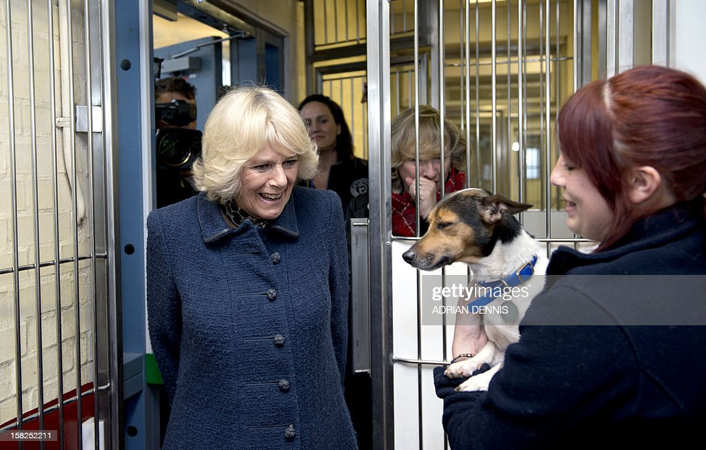 Britain's Camilla, Duchess of Cornwall, walks into a dog kennel where Kitty Ward (R) holds Misty, an eight-year-old Jack Russell Terrier, during the former's visit to the the Battersea Dogs & Cats Home in London on December 12, 2012. Earlier in the year The Duchess rehomed Bluebell, a Jack Russell Terrier that was found astary in a London park.