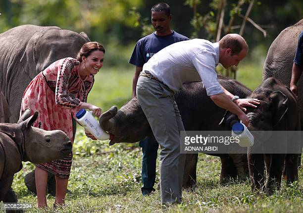 Britain's Catherine Duchess of Cambridge and Prince William Duke of Cambridge feed baby elephants at the Centre for Wildlife Rehabilitation and...