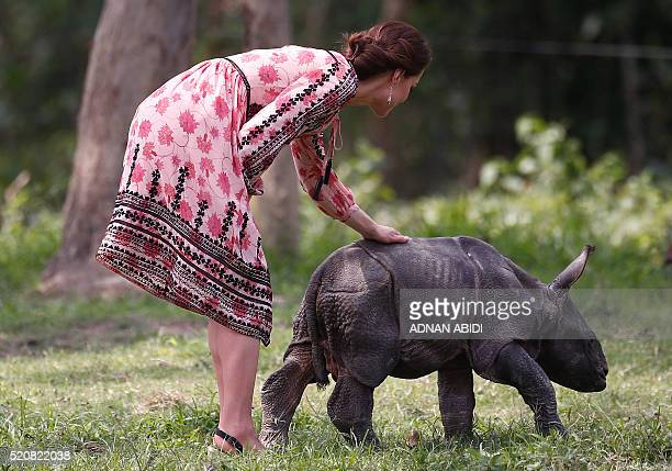 Britain's Catherine Duchess of Cambridge pets a rhino calf at the Centre for Wildlife Rehabilitation and Conservation at Panbari reserve forest in...