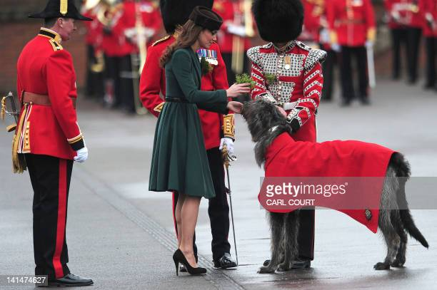 Britain's Catherine Duchess of Cambridge presents a traditional sprig of shamrock to Conmeal an Irish Wolfhound and regimental mascot of the Irish...