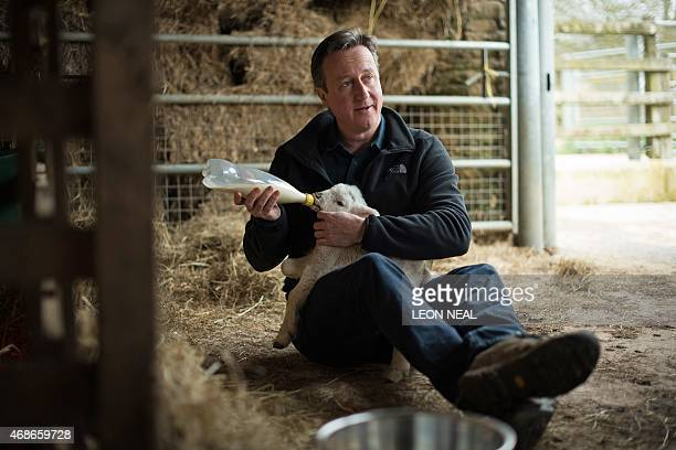 Britain's Prime Minister and leader of the Conservative Party David Cameron feeds orphaned lambs on Dean Lane farm near the village of Chadlington...