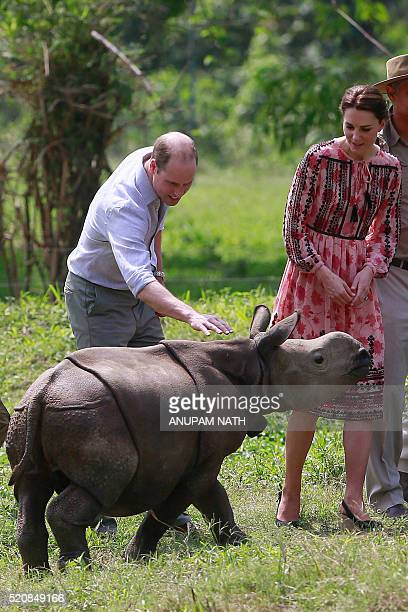 Britain's Prince William Duke of Cambridge and Catherine Duchess of Cambridge meet a rhino calf at the Centre for Wildlife Rehabilitation and...