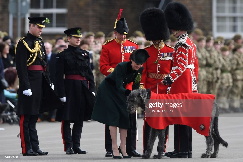 TOPSHOT - Britain's Prince William, Duke of Cambridge, (L) watches as his wife, Britain's Catherine, Duchess of Cambridge (C right) prepares a sprig of shamrock to attach to Wolfhound Domhnall, the regimental mascot of the Irish Guards, during a St Patrick's Day parade visit to Cavalry Barracks in Hounslow, west London on March 17, 2017. / AFP PHOTO / Justin TALLIS
