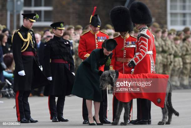 TOPSHOT Britain's Prince William Duke of Cambridge watches as his wife Britain's Catherine Duchess of Cambridge prepares a sprig of shamrock to...