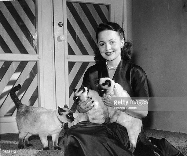 British actor Olivia de Havilland sits on the floor holding three Siamese cats circa 1950