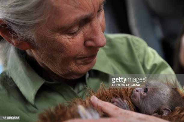 British anthropologist and primatologist Jane Goodall holds a baby Cariblanco monkey during her visit to the Rehabilitation Center and Primate Rescue...