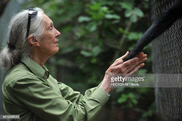 British anthropologist and primatologist Jane Goodall takes the hand of a Spider Monkey during her visit to the Rehabilitation Center and Primate...