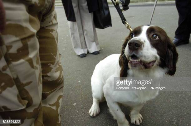 British Army dog Buster after receiving the PDSA Dickin Medal the animal equivalent of the Victoria Cross at London's Imperial Museum Buster a...