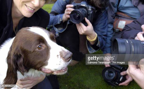 British Army dog Buster faces the media after receiving the PDSA Dickin Medal the animal equivalent of the Victoria Cross at London's Imperial Museum...