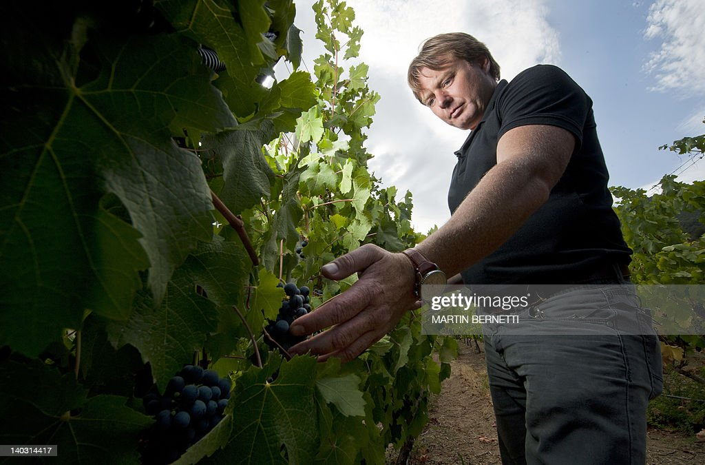 British astronomer and wine producer Ian Hutcheon, owner of the Tremonte vineyard, checks Cabernet Sauvignon grapes in San Vicente de Tagua Tagua, 120 km south of Santiago,on February 15, 2012. Hutcheon had recently presented his new wine, Meteorito, a unique drink prepared with a Cabernet Sauvignon wine in which barrel he put a 4.5 billion-year-old meteorite for a 12-month aging. AFP PHOTO/Martin BERNETTI