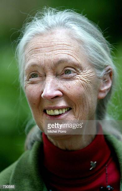 British environmentalist Jane Goodall poses for a portrait at garden of Groningen University at the Sharing the Planet conference June 14 2002 in...