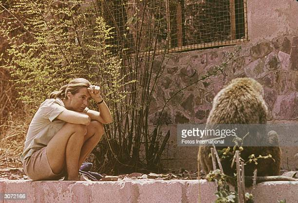 British ethologist Jane Goodall sits outdoors and studies an African baboon 1974