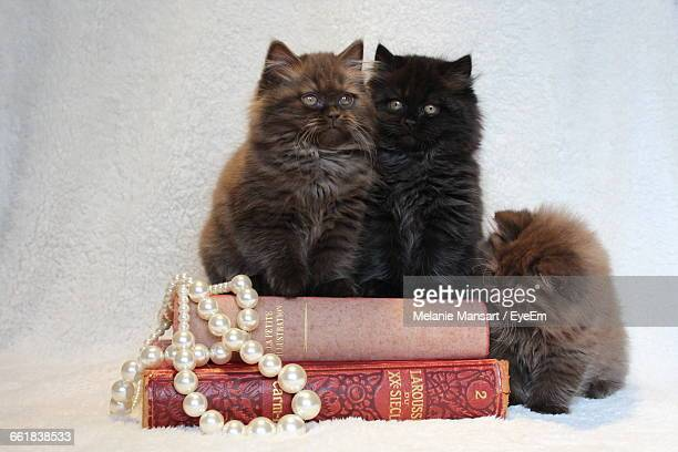 British Longhair Cats With Pearl Jewelry And Books At Home