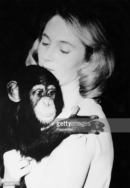 British primatologist Jane Goodall at the National Zoo in Washington DC with the zoo's eleven monthold chimpanzee Lulu 29th February 1964