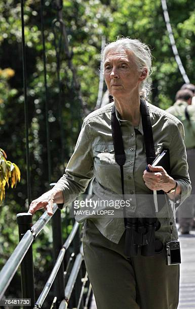 British primatologist Jane Goodall visits the Organization for Tropical Studies' La Selva Biological Research Station in Sarapiqui 80 km northeast of...