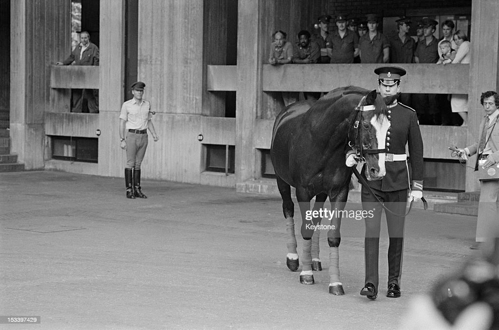British soldier Sergeant Michael Pedersen, of the Blues and Royals cavalry regiment, leads out the horse Sefton from Hyde Park Barracks, London 29th August 1984. Sefton is retiring from the British Army after seventeen years and is on his way to a new home in Speen, Buckinghamshire. Pedersen was riding Sefton in a military parade in Hyde Park on 20th July 1982, when a Provisional IRA car bomb killed five soldiers and seven horses. Sefton survived despite a severed jugular vein, an eye injury and 34 other wounds.