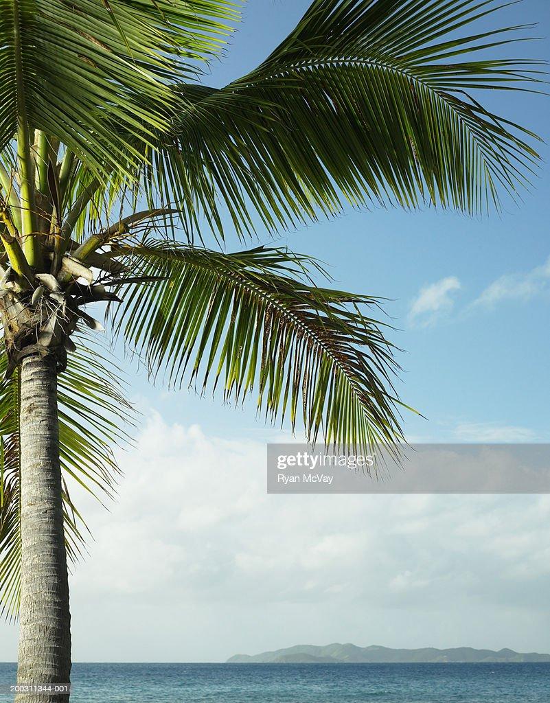 British Virgin Islands, Tortola, palm tree and seascape : Stock Photo