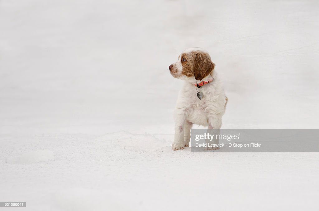 Brittany in the snow