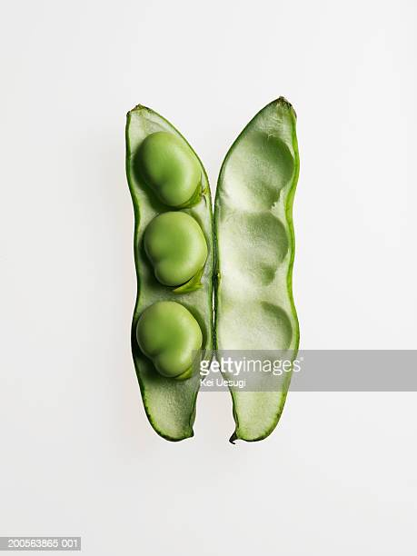 Broad bean against white background, close-up