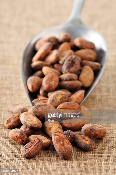 broad bean chocolate
