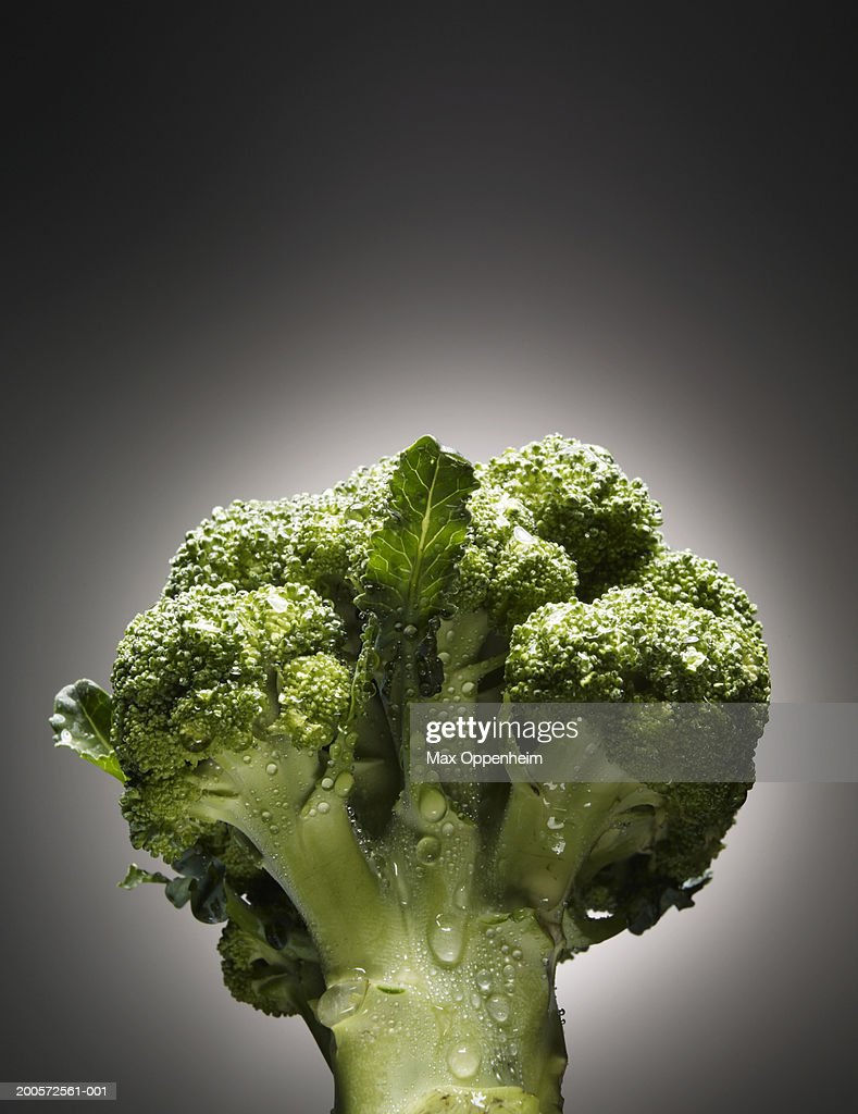 Broccoli covered in water droplets : Stock Photo