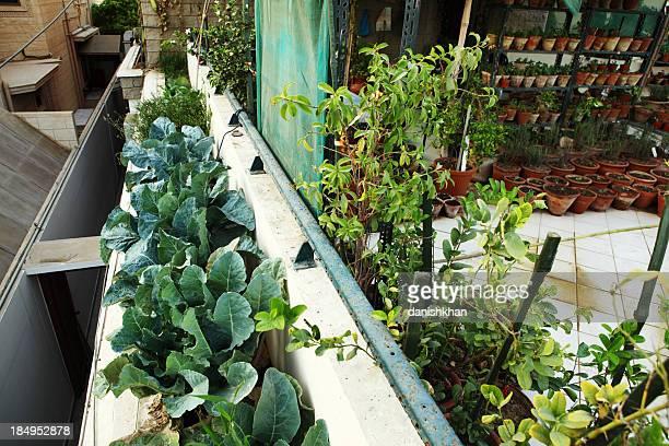 Brokkoli in städtischen Bio-Gemüse und Kräuter über Balkon Garten
