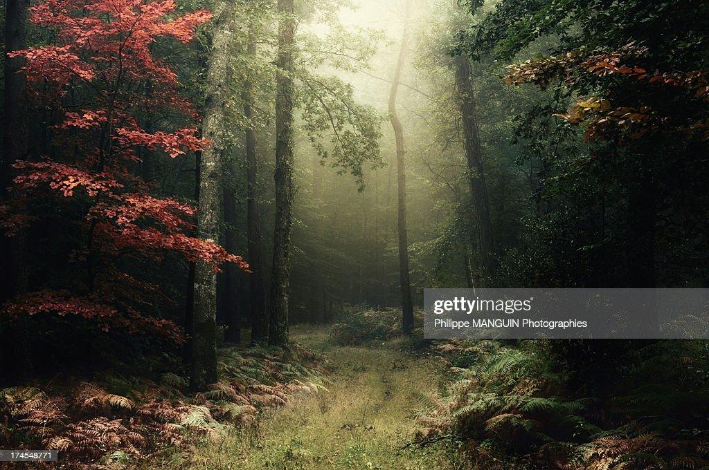 broceliande - foret d'automne