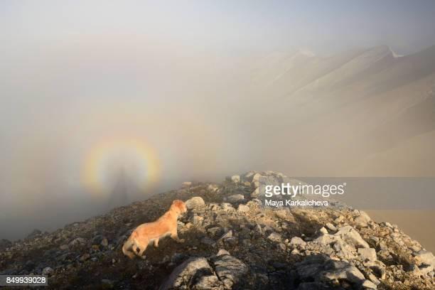 Brocken spectre rare view and golden retriever dog in a misty mountain