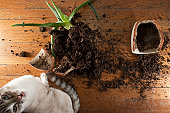 a broken clay pot with spilled soil and plant while a defiant cat looks on.