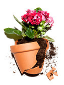 broken flower pot with plant