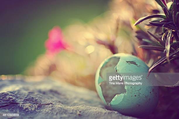 Broken Robin Egg Shell