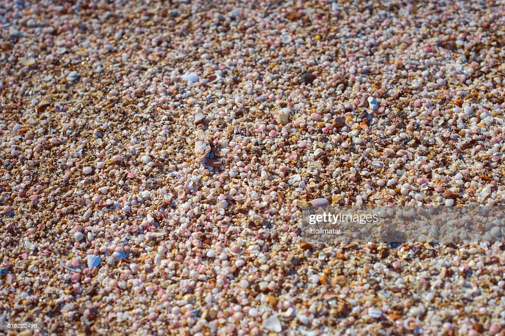 broken small corals, scrap of sea shell on the sand : Stock-Foto