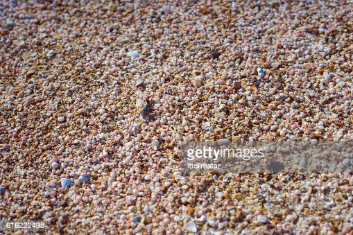 broken small corals, scrap of sea shell on the sand : Stockfoto