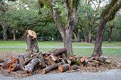 Broken, tree, after, hurricane, park.