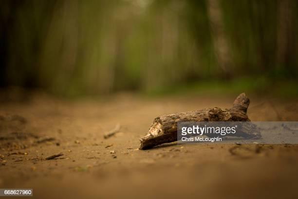 Broken tree branch on a dirt track