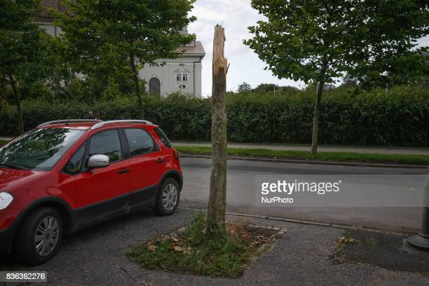 A broken tree is seen near the city center on 19 August 2017 Severe weather conditions in recent weeks have caused heavy damaged to nature and...