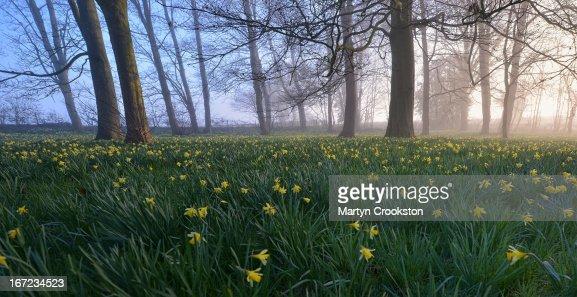 Bromsberrow Heath