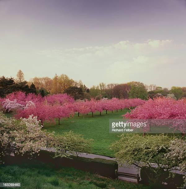Brooklyn Botanical Gardens Spring Color
