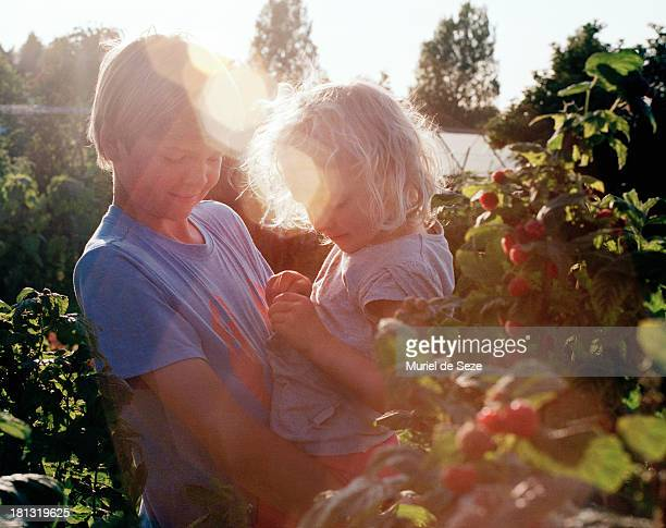 Brother and sister picking raspberries