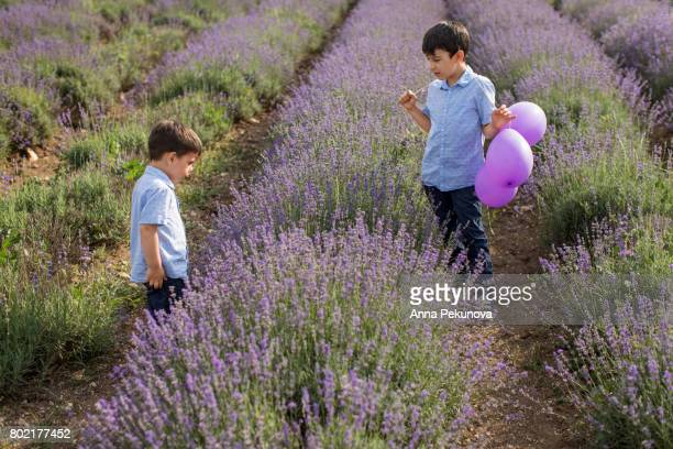 Brothers (3 yo and 8 yo) in a lavender field