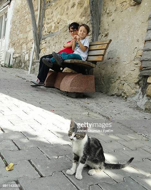 Brothers Sitting On Bench While Looking At Kitten