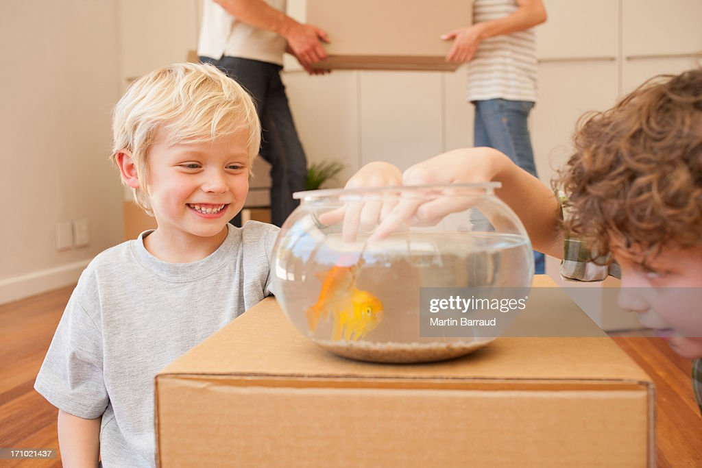 Brothers teasing fish in fish bowl in new house : Stock Photo
