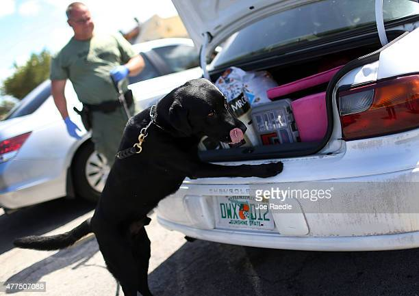 Broward Sheriff's Office deputy Greg Edlund runs his K9 dog Hoover over a stolen car for any signs of drugs including the a drug known as Flakka on...