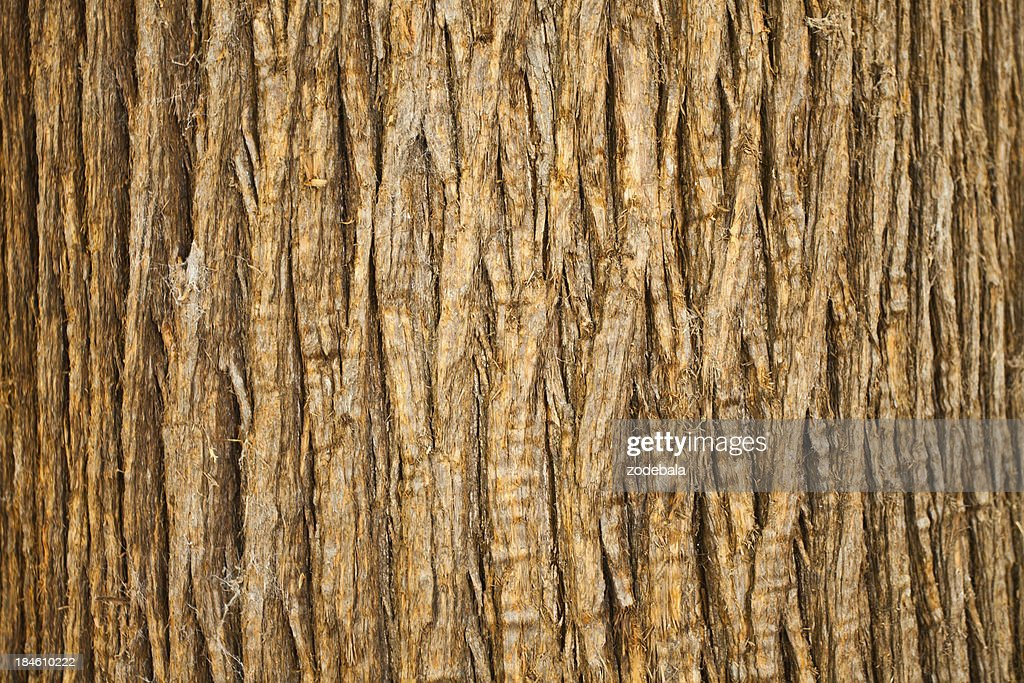 'Brown Bark of Tree, Natural Pattern'