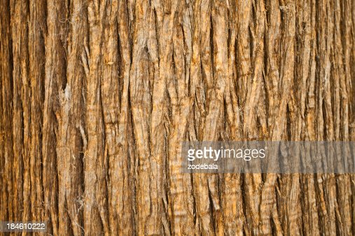'Brown Bark of Tree, Natural Pattern'
