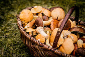 large basket full of fragrant and tasty forest mushrooms