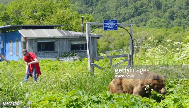 A brown bear and a man are separated by a simple electric fence near Kurile Lake on the southern tip of the Kamchatka Peninsula in Russia on July 20...